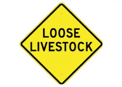 Loose Live Stock